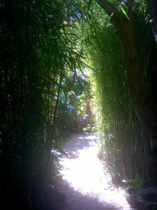 Bamboo_TH_IMG_0740OPT