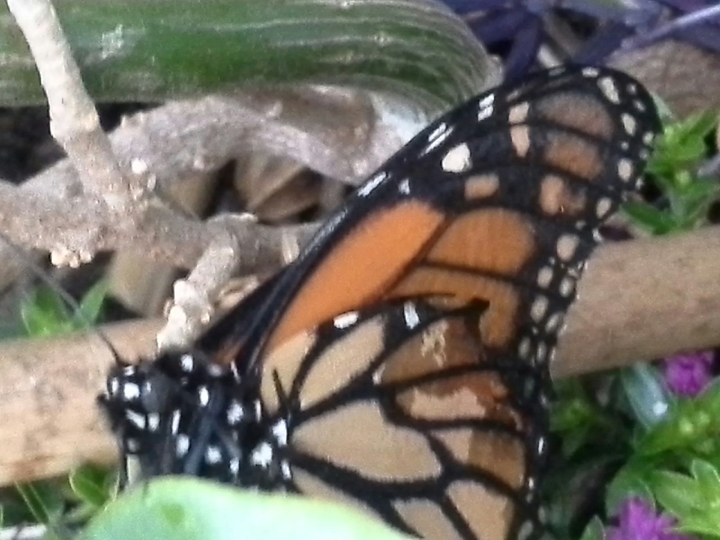 ButterflyFriend2